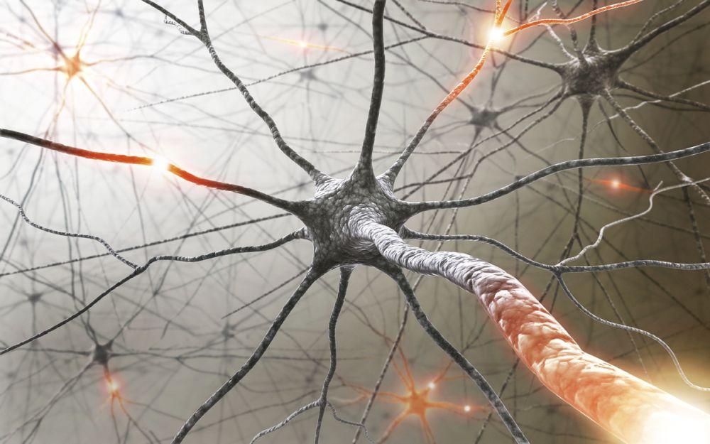 nervu-sistema